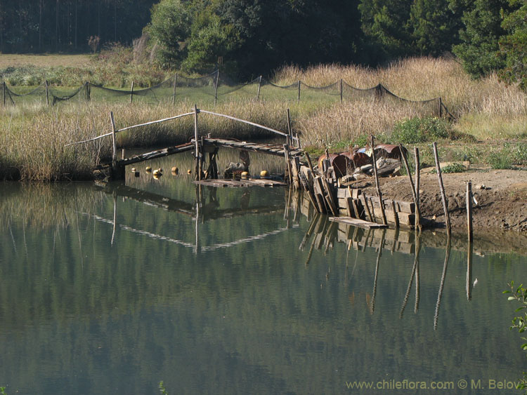 An image of a small wooden bridge.