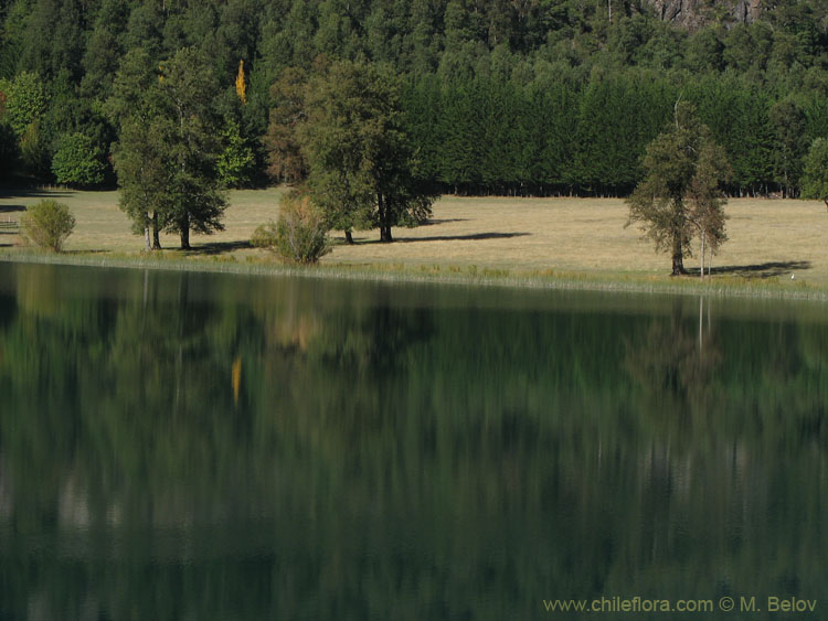 Image of a shoreline of a lake on a very calm morning, with a couple of trees.