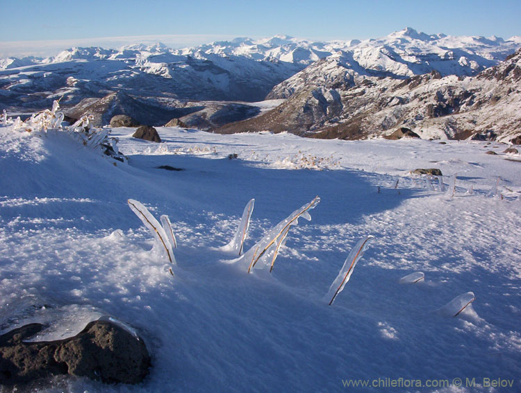 View of snow-covered mountains with icicles covering plants, in the evening, Vilches, Chile.
