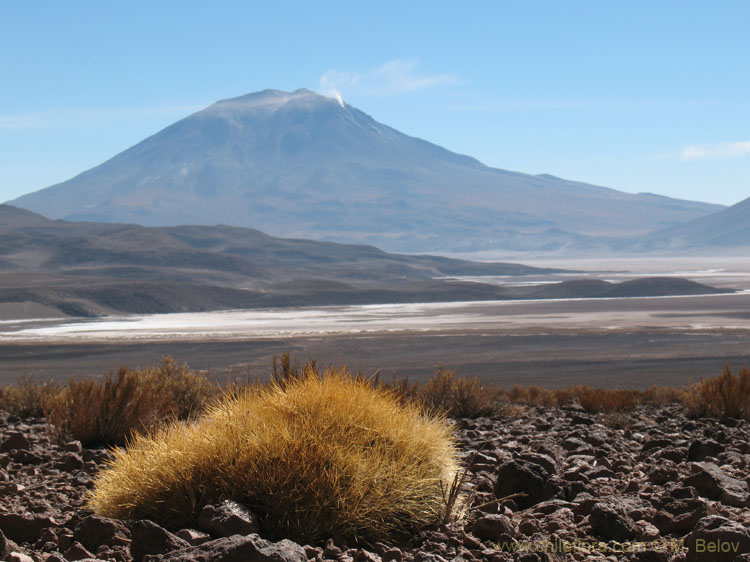 Volcanoes and Cacti:with Salt Lakes in-between