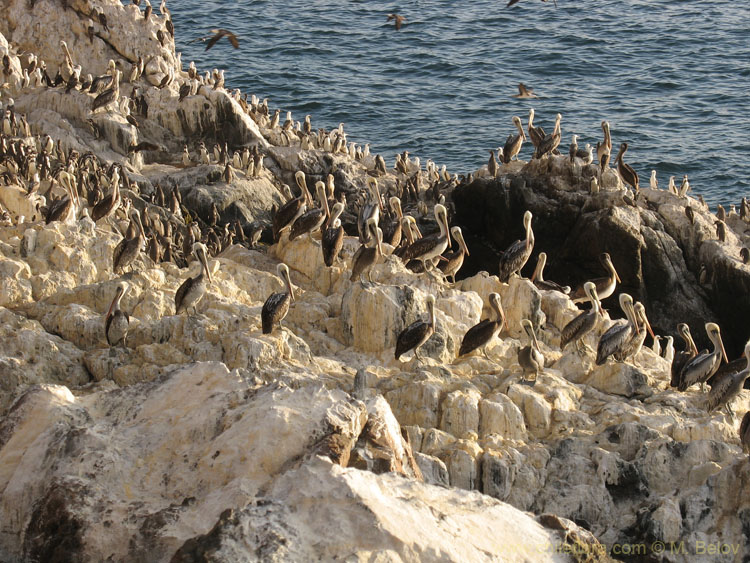 Pelican Island:Islands off the coast are heaven for birdlife. This place is about 30 km. north of Tal-tal.