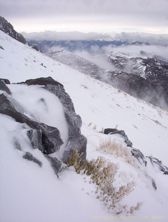 View of ice-covered slope, stones and frozen plants, Vilches, Lircay, Chile.